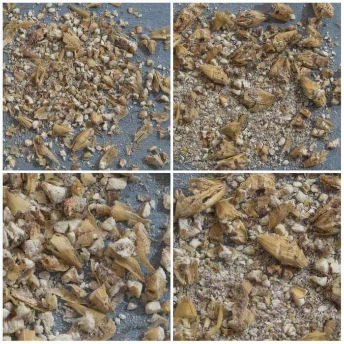 Фото образцов помола сухого и влажного солода на 2-вальцовой мельнице с зазором 0,48 мм.